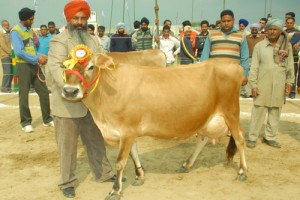 Indian dairy outlook