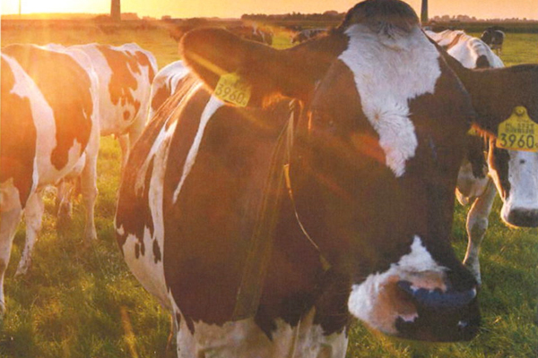 IDF releases 2nd edition of Dairy Sustainability Outlook