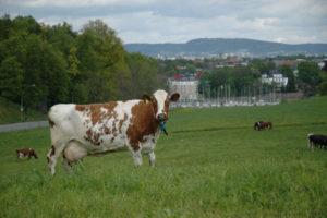Global dairy sector on animal welfare