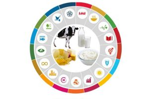 European Dairy Sector and Sustainable Development Goals