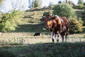 EDA Dairy Focus: Romania