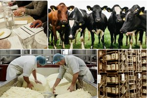 Quicke's farm delivers Academy of Cheese training
